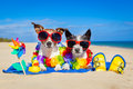 Couple of dogs on vacation Royalty Free Stock Photo