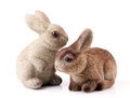 Couple of easter bunnies isolated on white background Royalty Free Stock Image