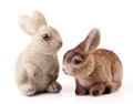 Couple of easter bunnies on white background Stock Photos