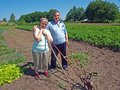 Couple of farmers elderly country with gardening tools Stock Photo