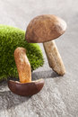 Couple of fresh mushrooms. Stock Image
