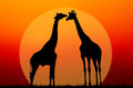 Couple of giraffes silhouette against sunset background Royalty Free Stock Images