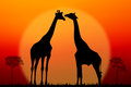 Couple of giraffes silhouette against sunset background Royalty Free Stock Image