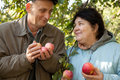 Couple hold apples and look against each other Stock Image