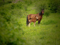 Couple of horses in green field in Navarra mountains. Royalty Free Stock Photo