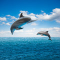Couple of jumping dolphins beautiful seascape with deep ocean waters and cloudscape Stock Image