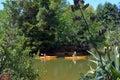 Couple kayaking over Matakana river New Zealand Royalty Free Stock Photo