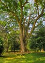 Couple in love sitting under a big tree