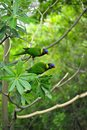 Couple parrot on tree at jurong bird part singapore Royalty Free Stock Images