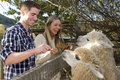 Couple at Petting Zoo Royalty Free Stock Photo
