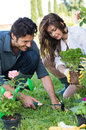 Couple planting plant in garden happy young Stock Photos
