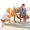 Couple playing with pet dog. Royalty Free Stock Photo