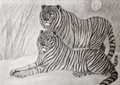 Couple of siberian tigers hand drawing Royalty Free Stock Image