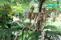 Couple of skeletons under the pine trees they are happy Royalty Free Stock Photo