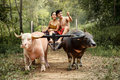 Couple Thai farmers family happiness time Buffalo yoke Royalty Free Stock Photo