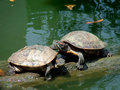 The couple turtle Stock Images