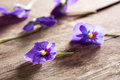 Couple of violet eatable flowers with yellow details on a wooden table close up Royalty Free Stock Photography