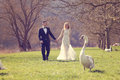 Couple walking in a park surrounded by swans Royalty Free Stock Photo