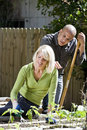 Couple working on vegetable garden in backyard Stock Image