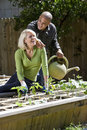 Couple working on vegetable garden in backyard Royalty Free Stock Photos