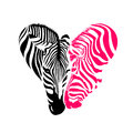 Couple zebra head, Black and pink colors in heart shape. Royalty Free Stock Photo