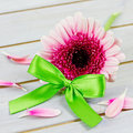 Coupon with flowers pink and green ribbon Royalty Free Stock Image