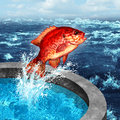 Courage concept and ambition symbol as a red fish jumping out of an artificial pool to join the natural blue ocean or farm raised Royalty Free Stock Images