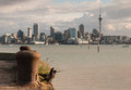 Courting pigeons with Auckland skyline Royalty Free Stock Photo