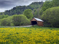 Covered bridge in vermont usa old historical the dandelion fields of Royalty Free Stock Photos