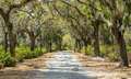Covered Rural Road in the American South Royalty Free Stock Photo