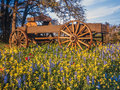 Covered wagon in Texas Hill country Royalty Free Stock Photo