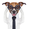 Covering ears dog Stock Images