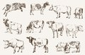 Cow animal husbandry set of vector elements Royalty Free Stock Photo