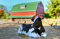 Cow in barnyard Royalty Free Stock Photo