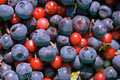 Cow berries and blueberries Stock Photos