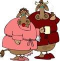 Cow Couple Stock Photo