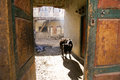 Cow in courtyard a a seen through an old well worn door with interesting light and a deep shadow for the mountain village life Stock Image