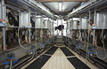 Cow farm agriculture milk automatic milking system Stock Image