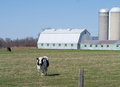 Cow, field, barn and silos Stock Images
