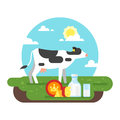 Cow graze in a field and dairy products Royalty Free Stock Photo