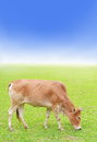 Cow on green grass Royalty Free Stock Photo