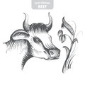 Cow hand-drawn vector illustration.