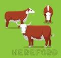 Cow Hereford Cartoon Vector Illustration