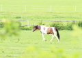 Cow horse Royalty Free Stock Photo