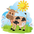 Cow on a meadow. Royalty Free Stock Photo
