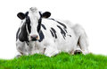 Cow on meadow Royalty Free Stock Photo