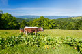 The cow in the meadow Royalty Free Stock Photo