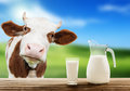 Cow and milk green grass Stock Photo