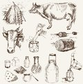 Cow and milk products Royalty Free Stock Photography