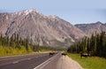 Cow Moose leads Two Calves Across Road Near Denali Alaska Royalty Free Stock Photo